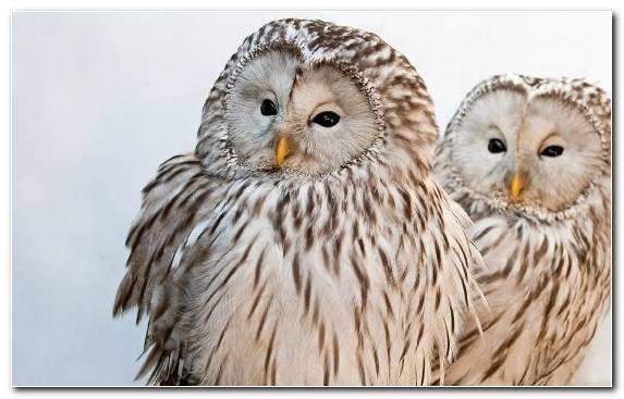 Image barn owl eurasian eagle owl snowy owl bird hummingbird