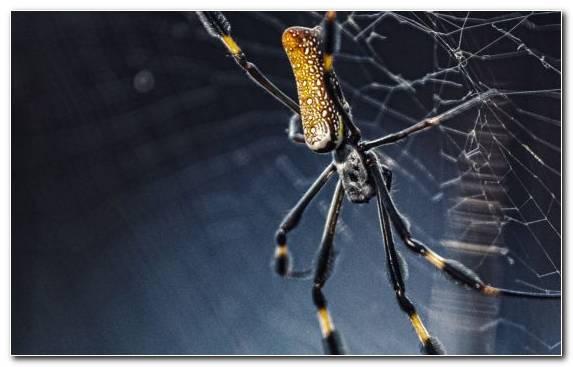 Image Barn Spider Spider Web European Spider Arthropod Invertebrates
