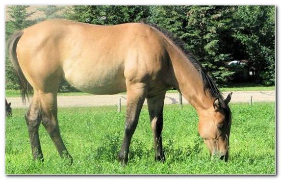 Image Bay Grass Colt Draft Horse Pasture