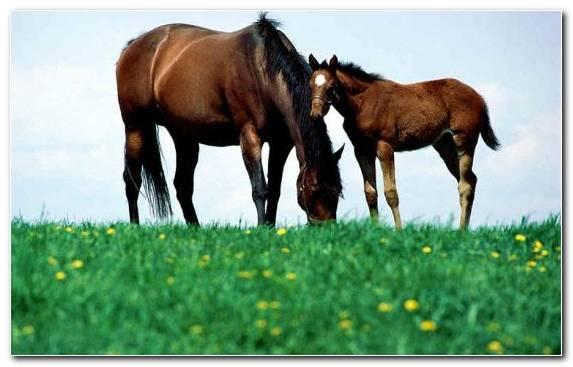 Image Bay Horses Black Colt Appaloosa