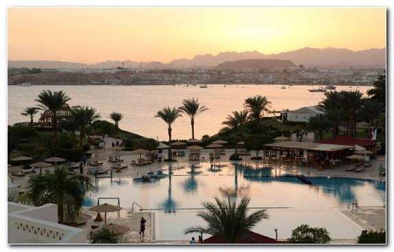 Image bay united kingdom tourism arecales palm tree