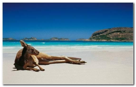 Image Beach Park Sand Caribbean Sky