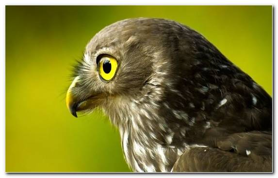 Image Beak Bird Bird Of Prey Falcon Wildlife