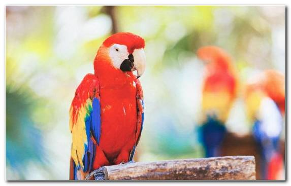 Image Beak Bird Vertebrate Common Pet Parakeet Macaw