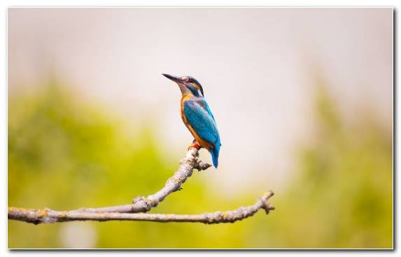 Image beak bird wildlife branch coraciiformes