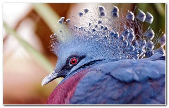 Image Beak Fauna Bird Wildlife Parrot