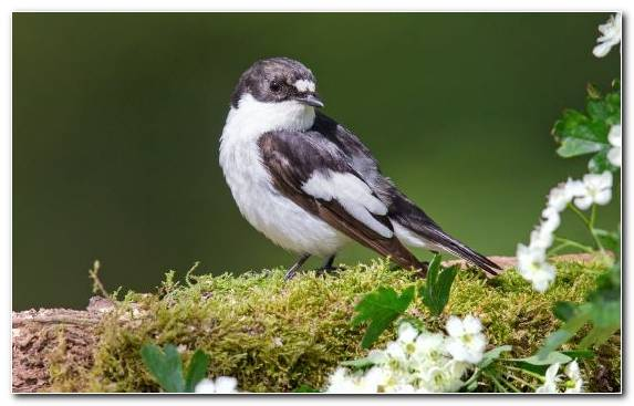 Image Beak House Sparrow Sparrow Bird Perching Bird