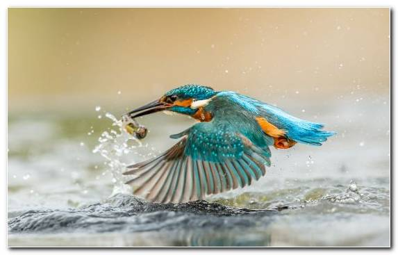Image Beak Kingfisher Wildlife Bird Wing
