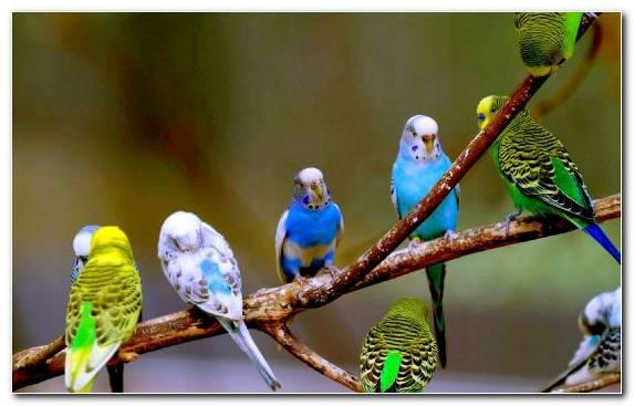Image Beak Lovebird Passerine Macaw Parakeet
