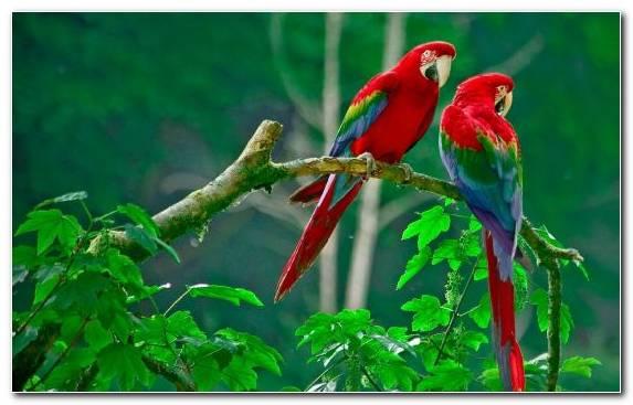 Image Beak Macaw Lorikeet Budgerigar Parakeet