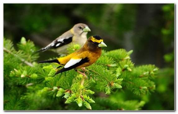 Image Beak Old World Flycatcher Bird Wildlife Parrot