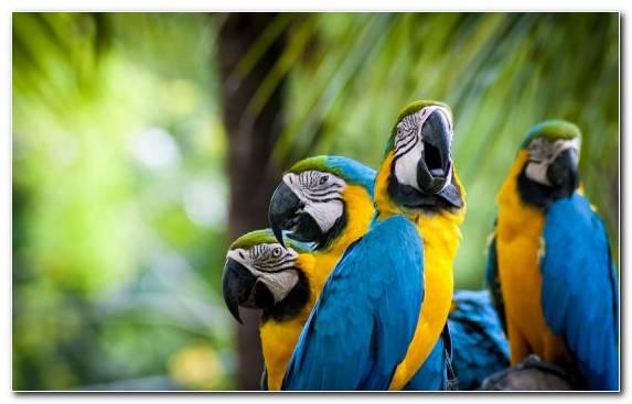 Image Beak Parrot Macaw Blue And Yellow Macaw Parakeet