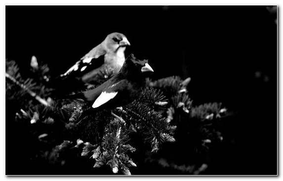 Image Beak Science Black And White Black Monochrome Mode