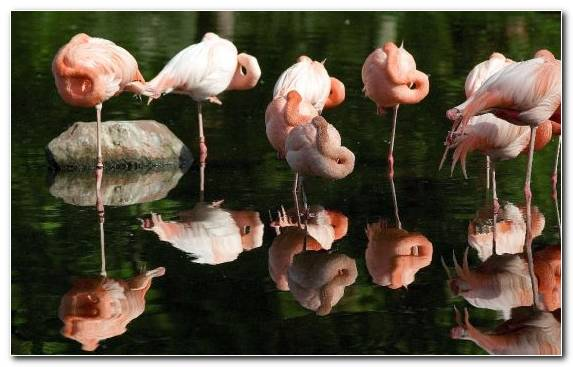 Image Beak Water Bird Bird Flamingo