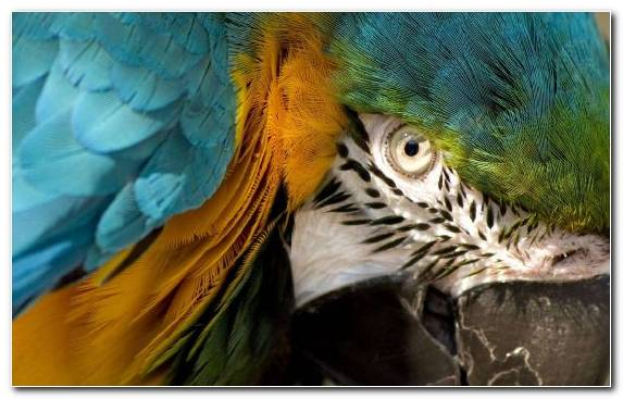 Image Beak Wildlife Bird Parrot Feather