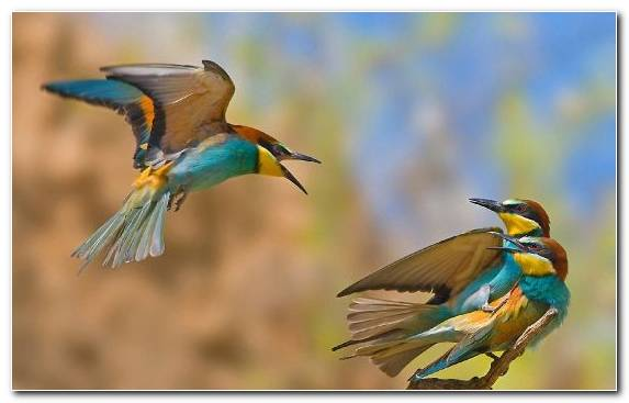 Image Beak Wildlife Kingfisher Bird Wing
