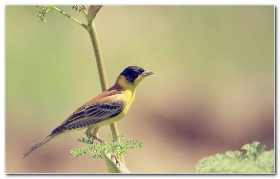 Image Beak Wildlife Old World Flycatcher Flora Bird