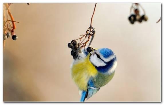 Image Beak Wing Bird Perching Bird Feather