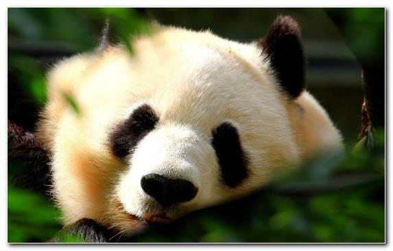 Image Bear Fauna Snout Fur Nose