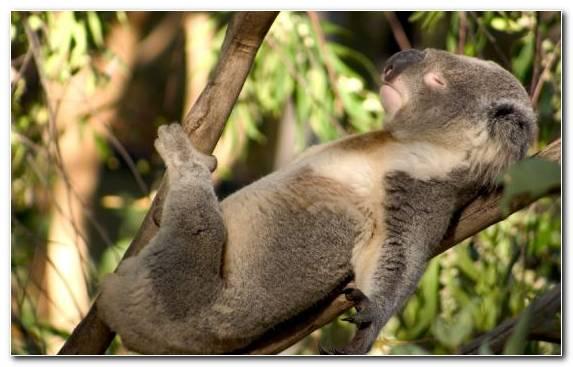 Image bear terrestrial animal jungle marsupial tree