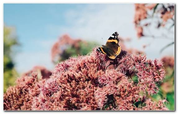 Image bee spring pollen flower pollinator