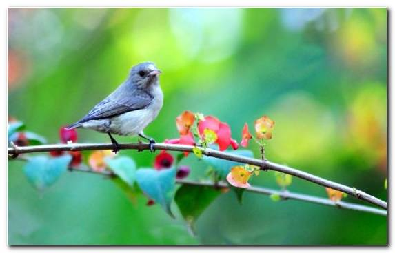 Image Bird Beak Flora Branch Old World Flycatcher