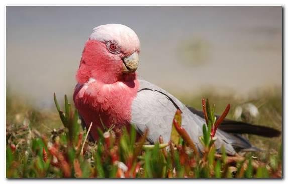 Image Bird Beak Parrot Cockatoo Parakeet