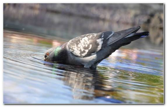 Image Bird Beak Reflection Wildlife Pigeons And Doves
