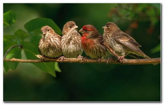 Image Bird Beak Sparrow Perching Bird Emberizidae