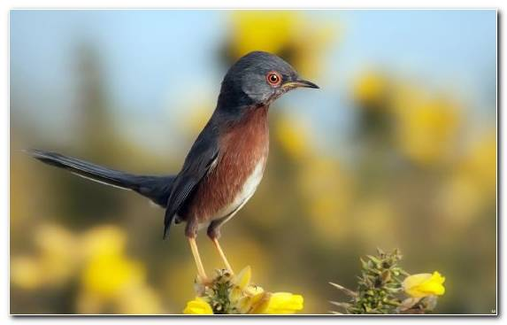 Image Bird Common Chaffinch Nightingale Robin Wildlife