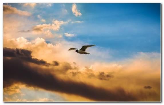 Image Bird Flight Morning Herd Seabird Atmosphere