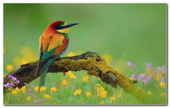 Image Bird Flight Old World Oriole Beak Ecosystem Animal