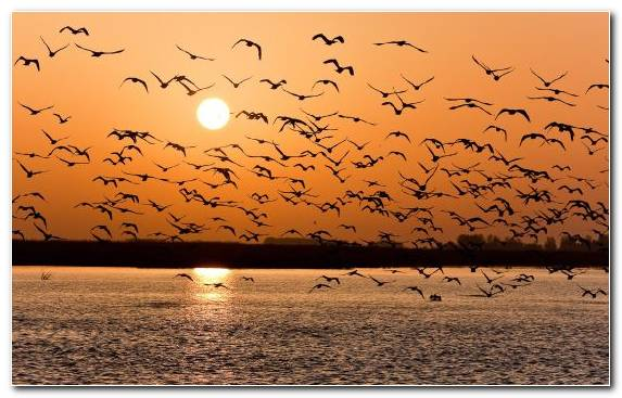 Image bird flight tranquillity calm sky pigeons and doves