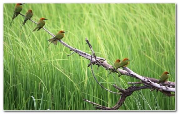 Image Bird Flora Grasses Plant Stem Parrot