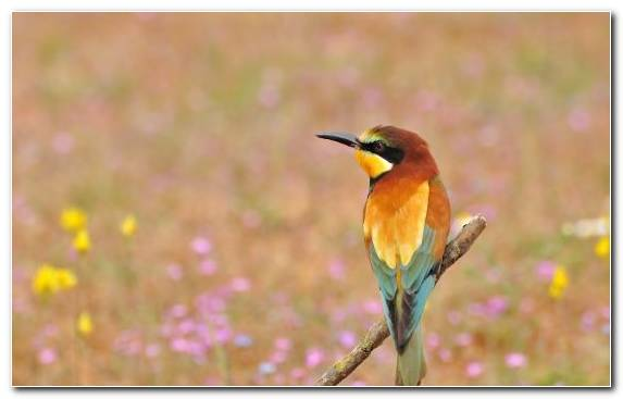 Image Bird Grass Family Flora Wildlife Morning