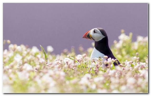 Image Bird Grass Seabird Beak Grasses