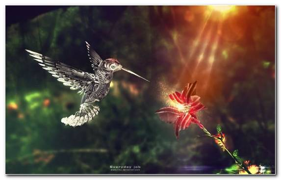 Image Bird Morning Sky Ecosystem Leaf