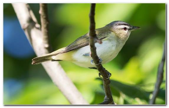 Image Bird Nightingale Perching Bird Old World Flycatcher Emberizidae