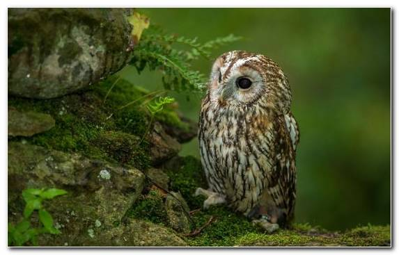 Image Bird Of Prey Beak Bird Wildlife Owl