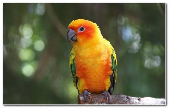 Image Bird Parrot Cockatiel Beak Sun Conure