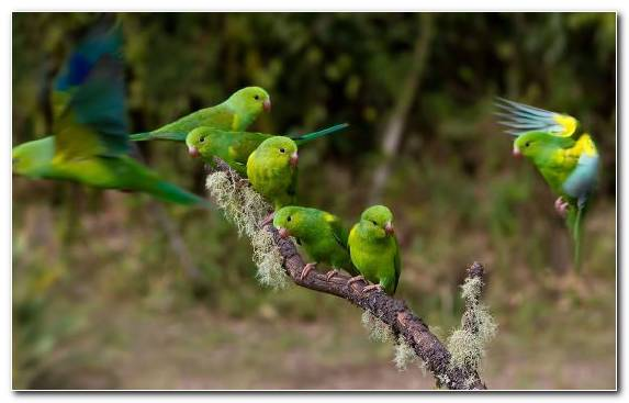 Image Bird Perico Animal Common Pet Parakeet Parakeet