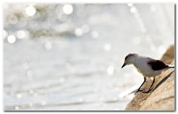 Image Bird Shorebird Beak Twig Emberizidae