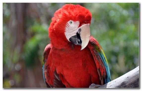 Image Bird Wildlife Scarlet Macaw Parakeet Parrot
