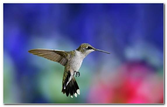 Image Bird Wing Pollinator Hummingbird Flora