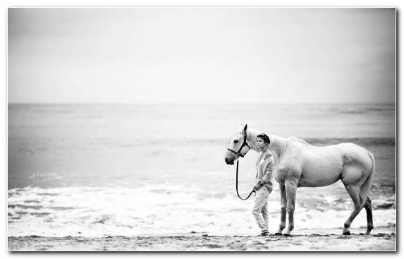 Image Black And White Happiness Photograph Horse Thought