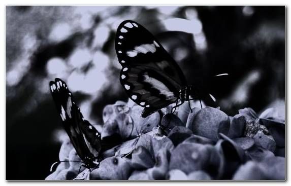 Image Black And White Monochrome Close Up Plant Insect