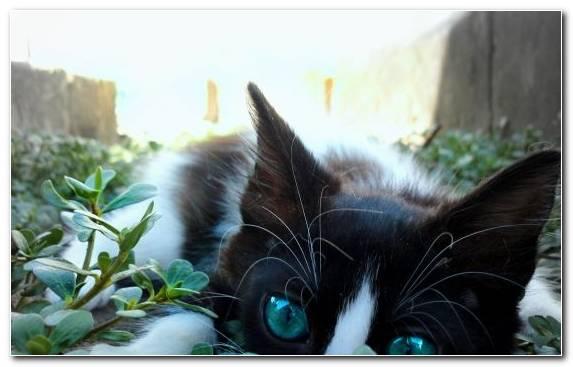 Image black cat snout fauna kitten