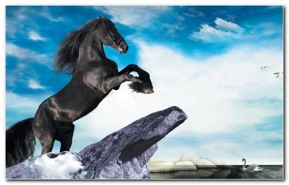 Image Black Sky Horse Horses Stallion