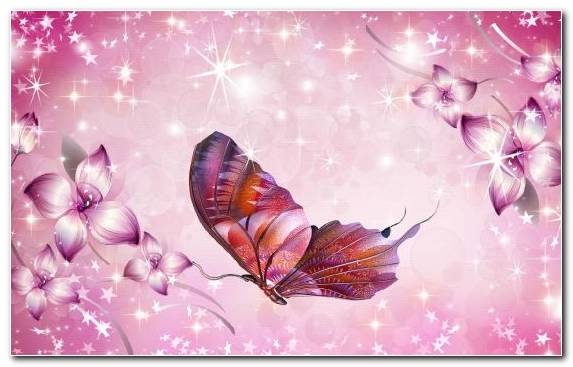 Image Blossom Insect Lilac Pink Flowers Petal