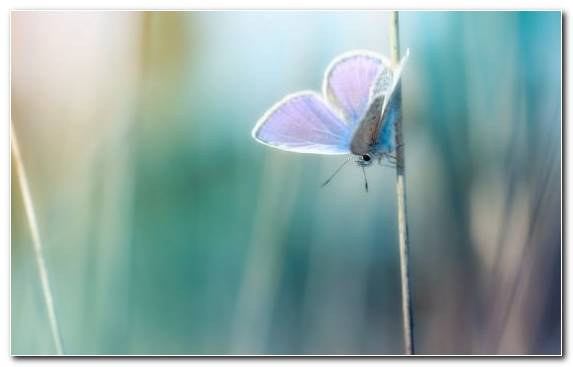 Image Blue Butterfly Lycaenid Insect Water